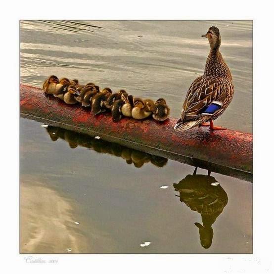 A mamãe e seus filhotinhos...