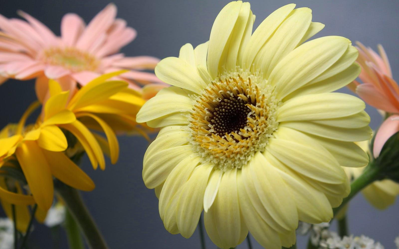 Wallpaper met bloemen van dicht bij