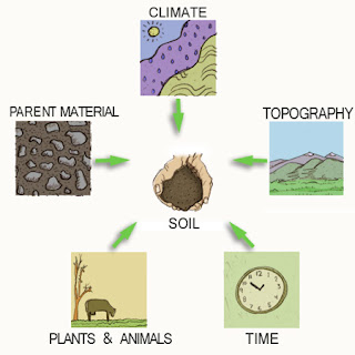 Menoa kenyalang how is soil formed for What 5 materials make up soil