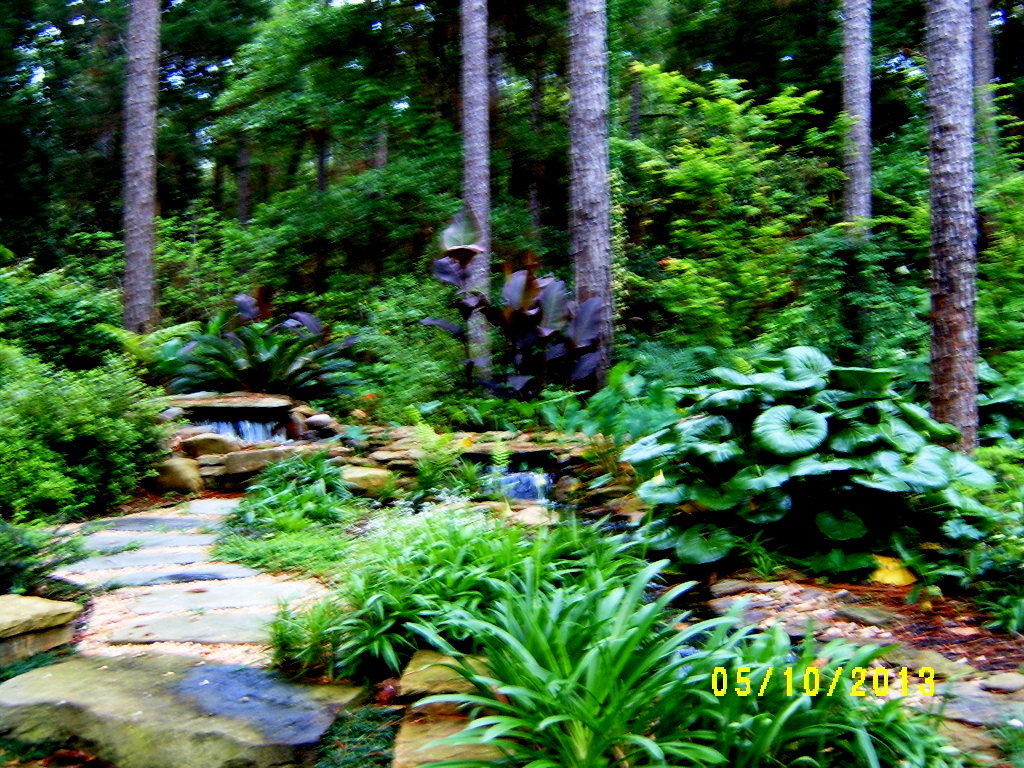 alabama rose and flower garden from a non green thumb my m i l u0027s