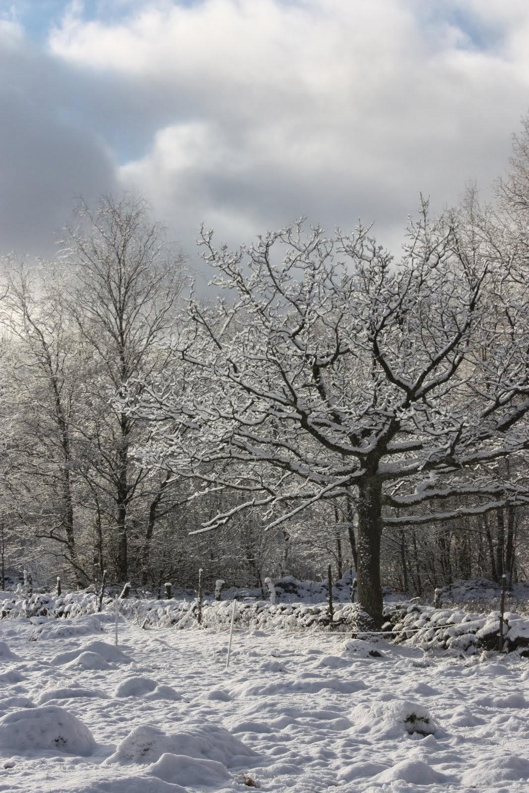 Naturen runt Lyckeröd Lantgård