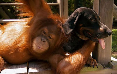 gambar-gambar binatang, binatang lucu, gambar binatang lucu, gambar hewan lucu,gambar-gambar lucu binatang, gambar-gambar binatang lucu,gambar hewan lucu, gambar binatang lucu, gambar hewan yang lucu, gambar binatang yang lucu, gambar-gambar hewan lucu