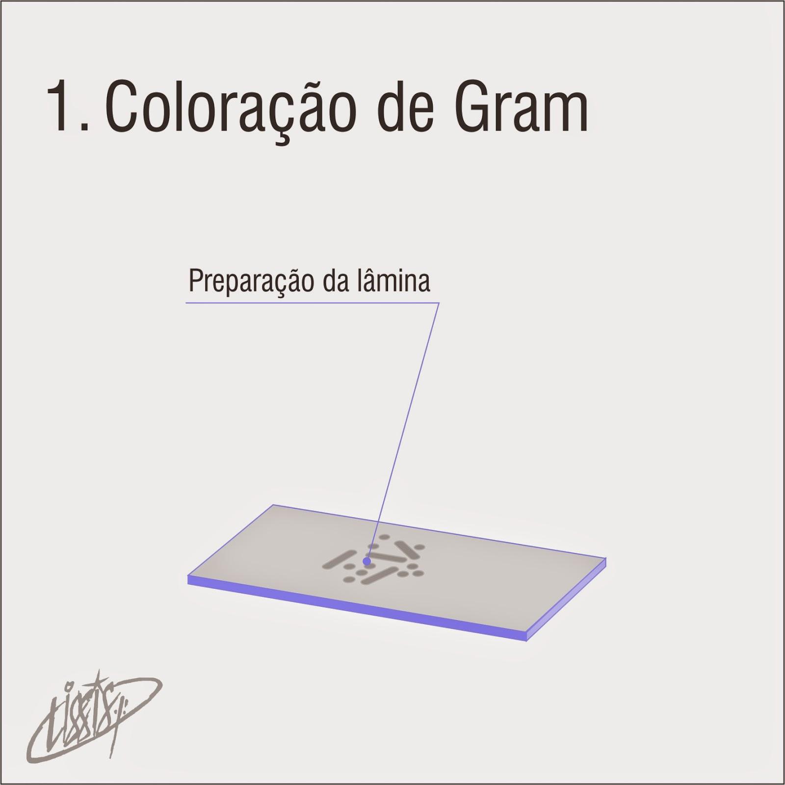 Coloração de Gram 01