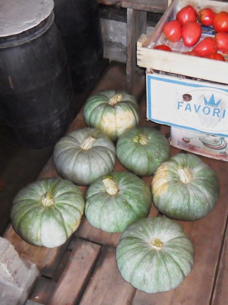 Итог - 7 спелых тыковок (6-8 кг) с одного растения.