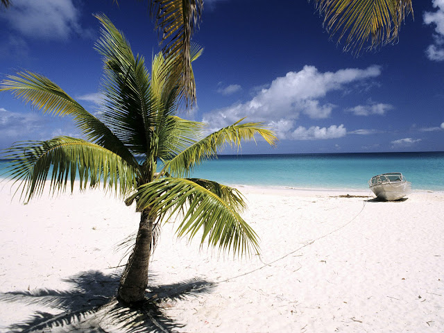 Palmeras Beach Palm Tree