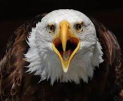 """E não me venham gritar e fazer gestos de liberdade agitando no ar vossas correntes... """""""