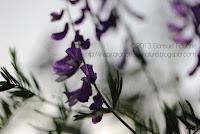 photo à contre-jour et macro fleur