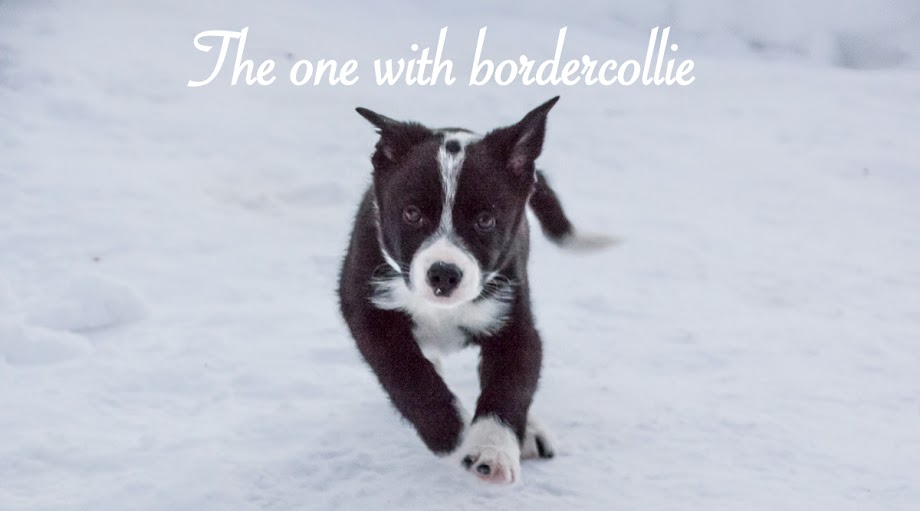 The One With Bordercollie
