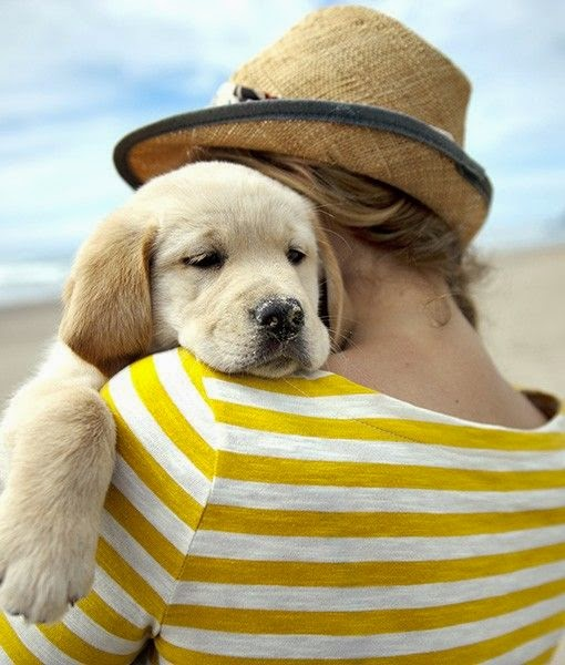 Cute Baby White Golden Retriever in Beach