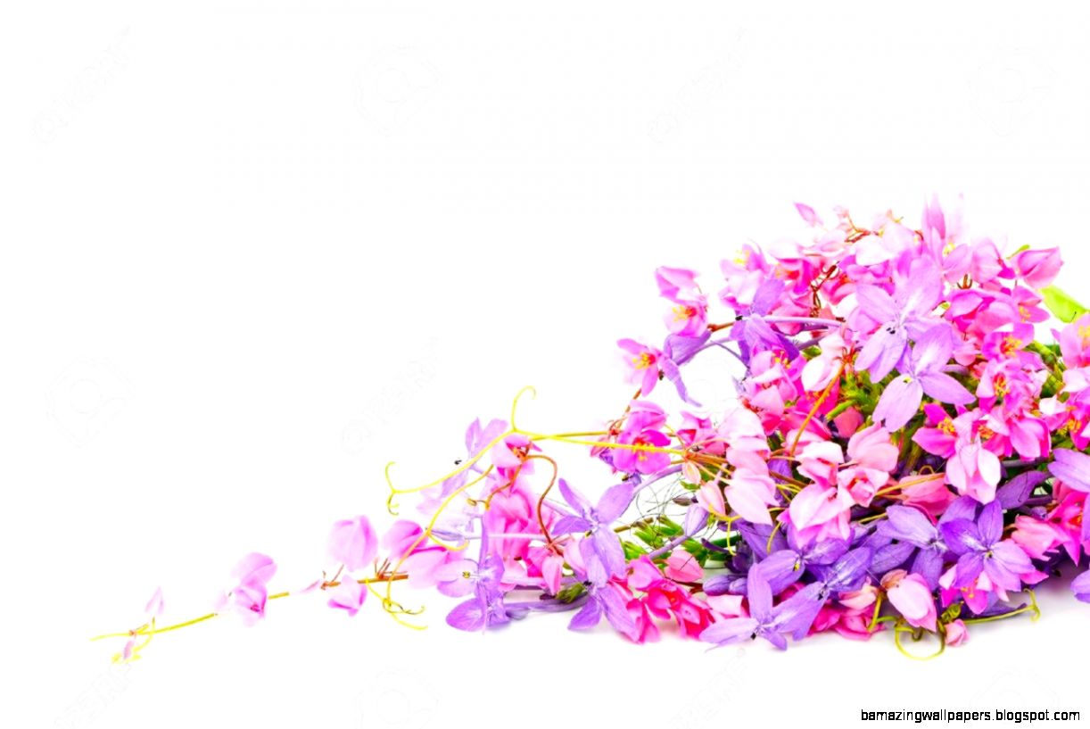 Pink Summer Flowers Backgrounds Amazing Wallpapers