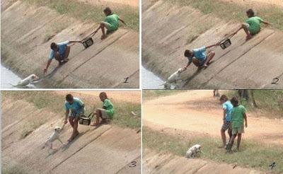 Penyelamatan Anjing!