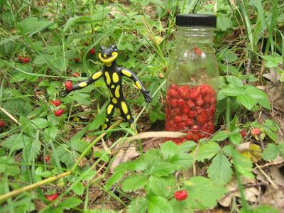 Lurchi im Erdbeerwald