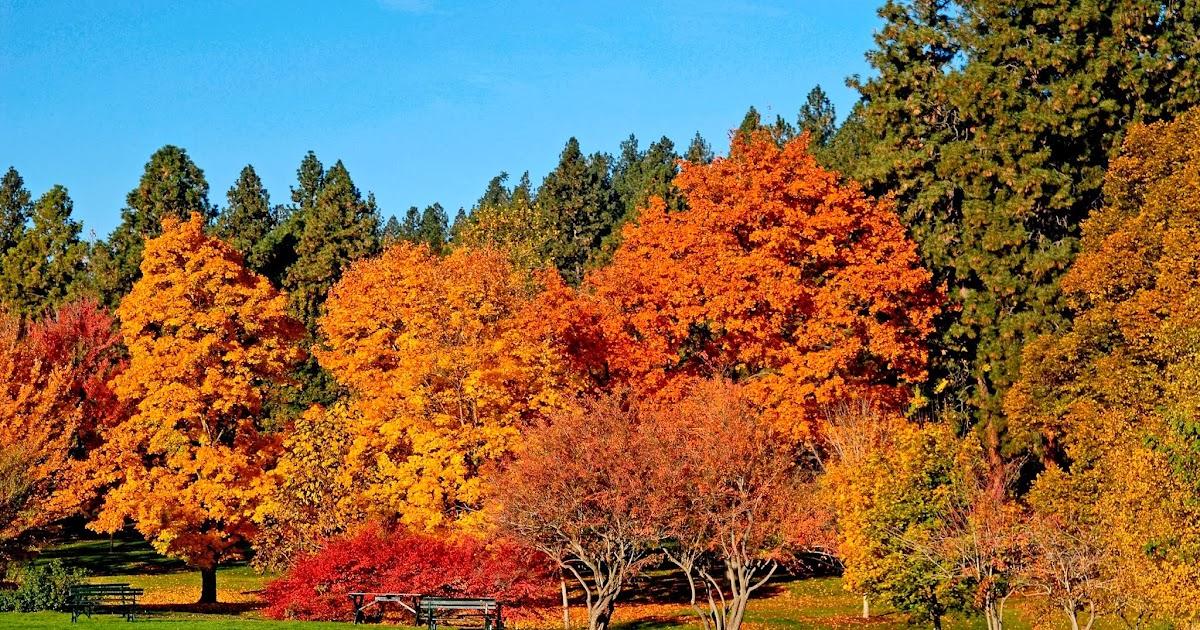 Arte y jardiner a dise o de jardines la naturaleza for Formacion jardineria