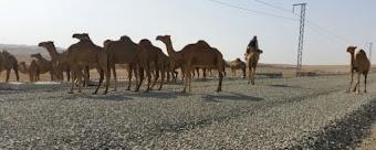 Proyecto Haramain: El AVE del Desierto: Una experiencia personal