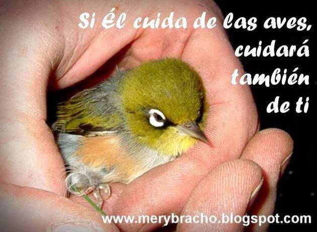 Postal Si Dios Cuida de las aves cuidará de ti. Postales cristianas con versos, versículos bíblicos, para compartir con amigos de facebook, twitter, Biblia. Ánimo, motivación cristiana. Imágenes, tarjetas ave en mano.