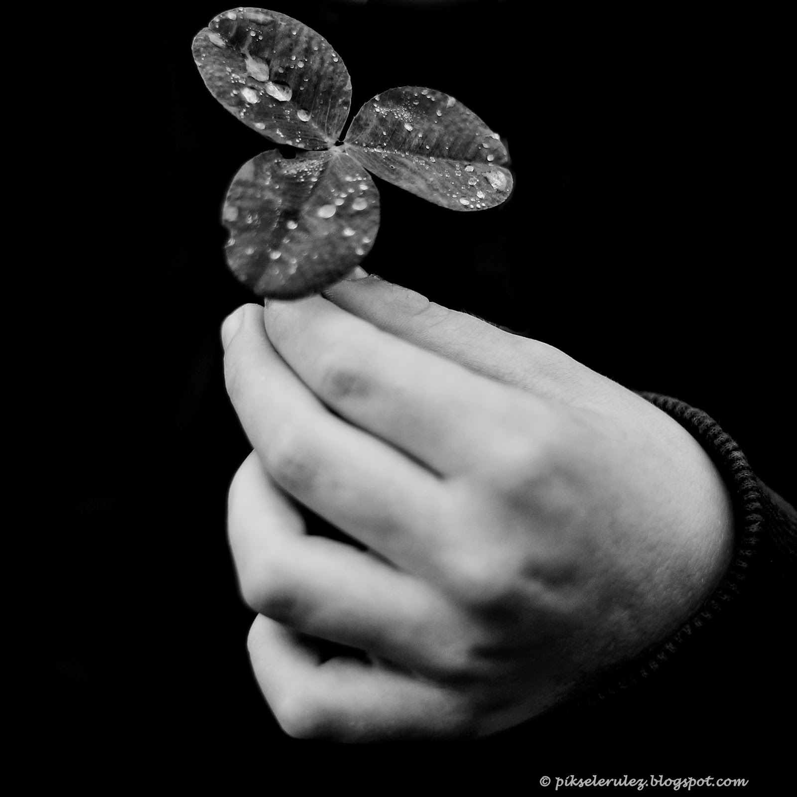 koniczyna, black and white, dziecko, fotografia