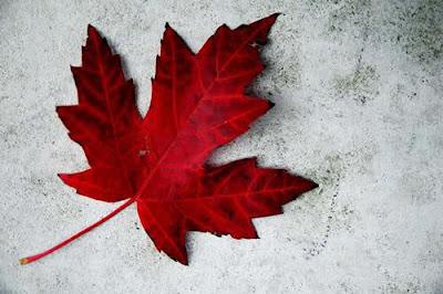 http://3.bp.blogspot.com/-jdY-3TeNRnQ/T-_AXdrVFYI/AAAAAAAABIc/0eE8-4Lu2jw/s400/maple_leaf.jpg