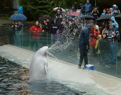 delfin+mojando+una+persona Fotos de Animales chistosas.