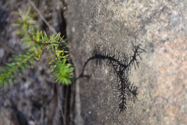 hornsby bushwalk