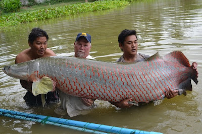 March 2013 total world info for World largest fish