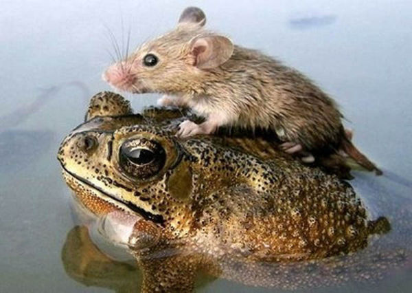 Most Adorable Animal Pairings Seen On www.coolpicturegallery.us