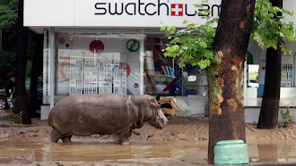 Little hippo goes Swatch shopping after the flood