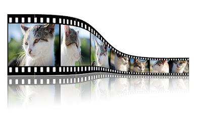 Penampakan Gambar Sederetan Kucing - Blog Mas Hendra