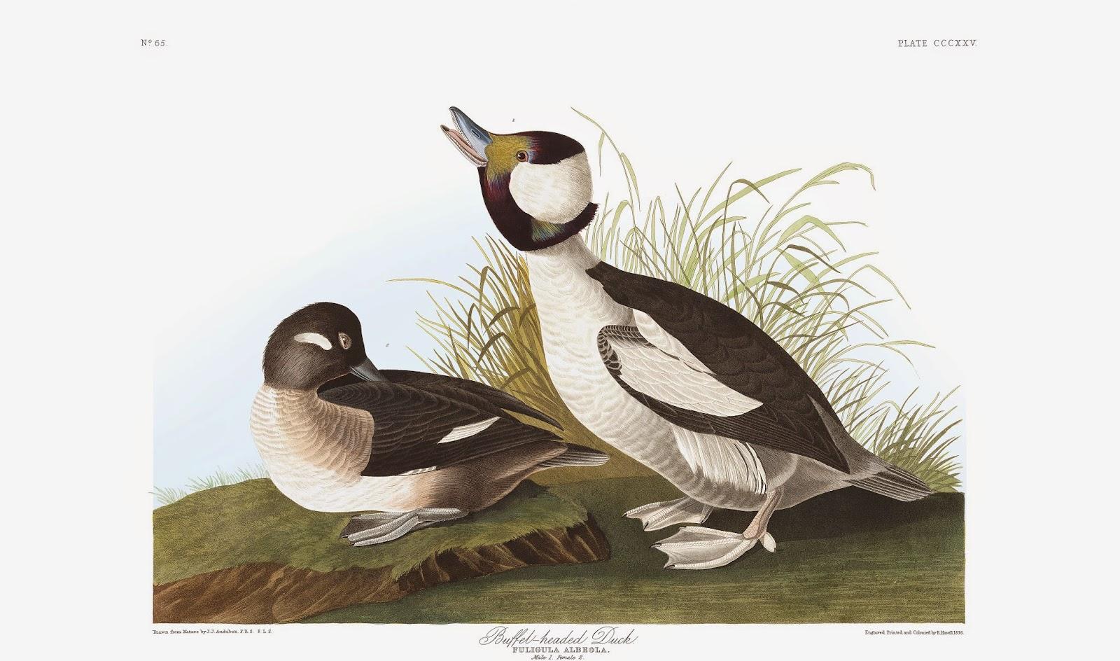http://www.audubon.org/content/john-james-audubon