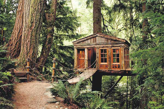 Suburban Camping Co.: living in the trees! {amazing ...