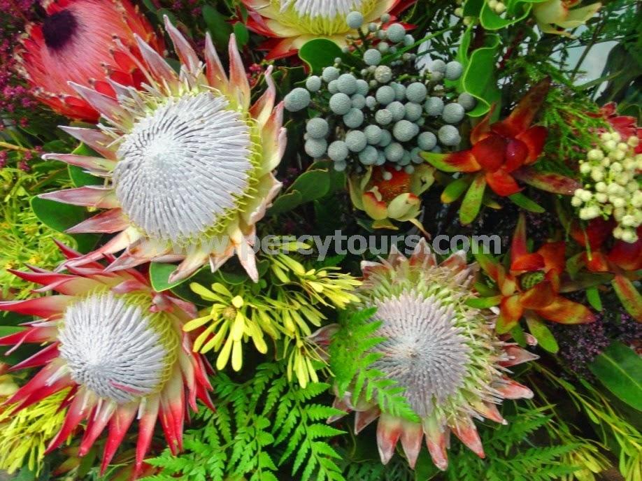 Cape Floral Kingdom, Cape Town
