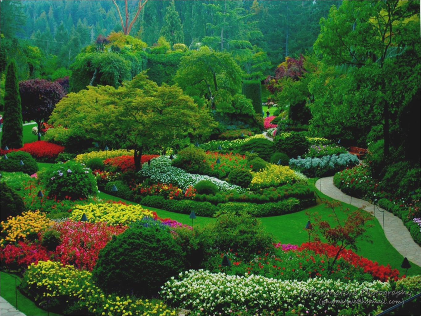 fotos de um jardim florido como um jardim completo de rosas, variadas