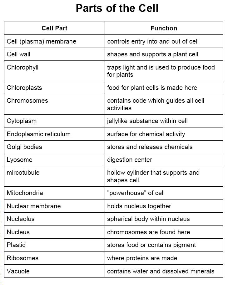 cells and their parts Cell organelles and their functions is a topic of biology studied during higher  education and graduate degree in science these cells are almost similar in all  the.