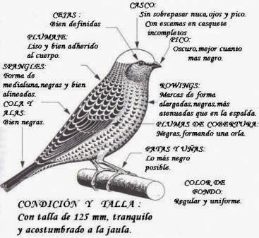 Esquema Del Lizard