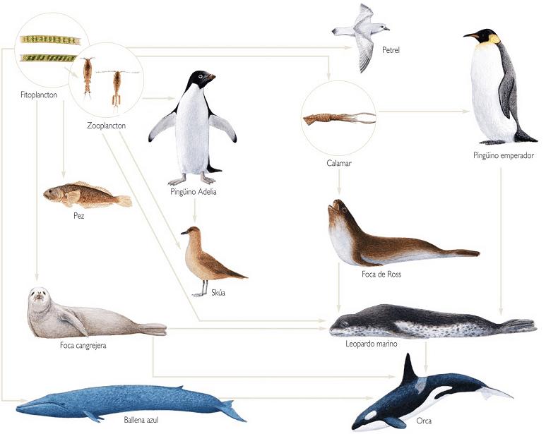 Tramas Tróficas en el Ecosistema