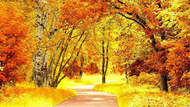Red yellow autumn scenery HD Wallpaper