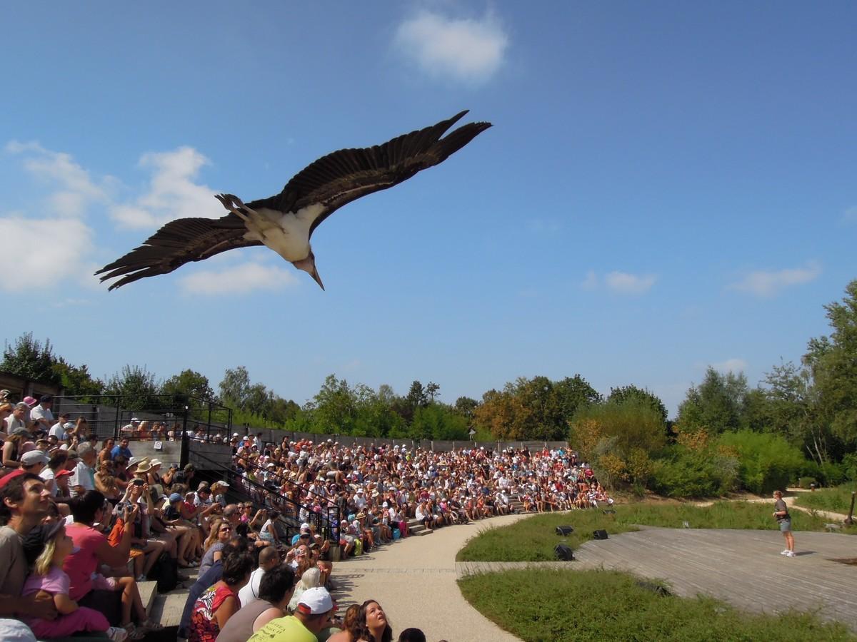 Le parc des oiseaux à villars les dombes entre bourg en bresse et