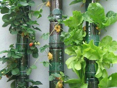 en el sistema hhp con sustrato slido la raz de la planta crece y absorbe agua y nutrientes que son aplicados diariamente a la mezcla de materiales