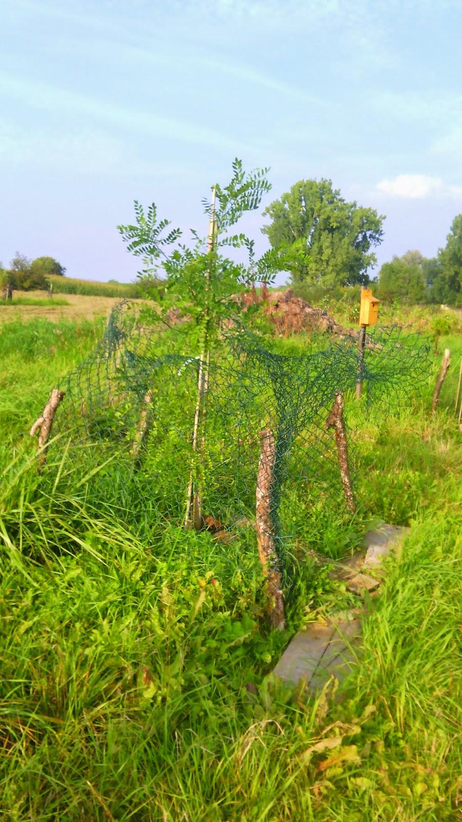 mon arbreÎle de vivre… le douaire : tout savoir sur arbre de miel