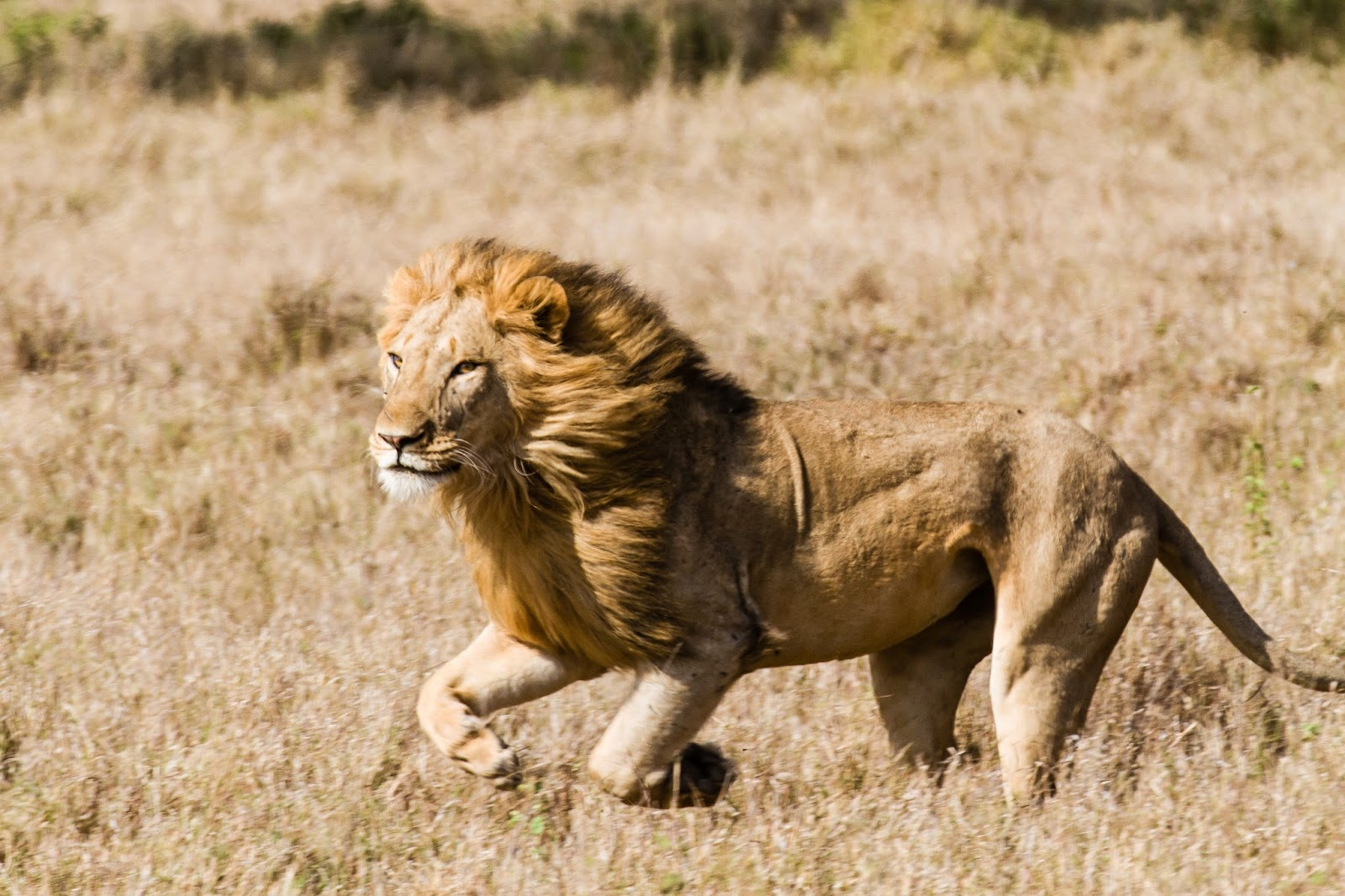 EcoTraining Blog: A phenomenal lion kill – defying the ...