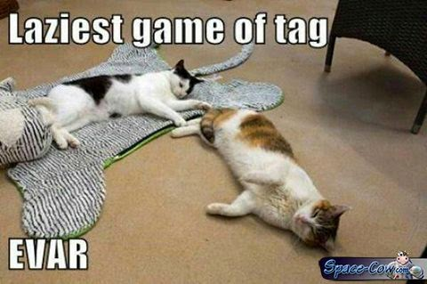 funny cats game picture