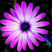 Imágenes de Flores. Fotografías Seleccionadas de Flores Naturales y . flores en la pintura