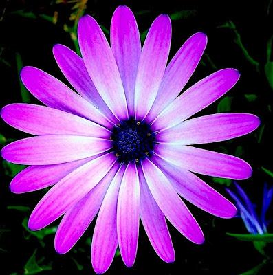 Imágenes-de-flores