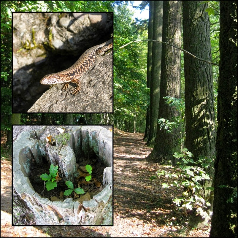 Waldspaziergang Trier