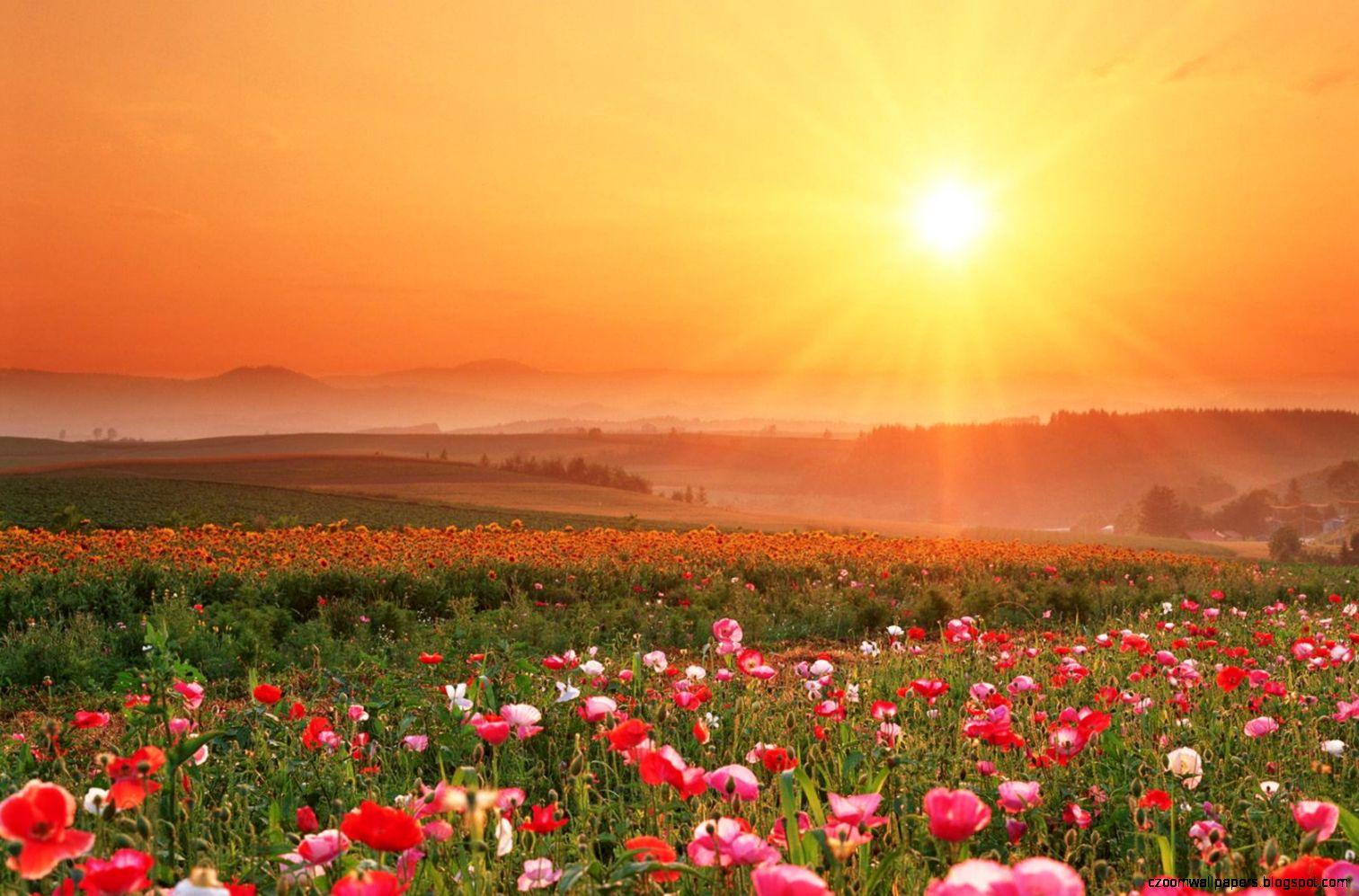 Sunset Field HD Wallpapers  Sunset Nature Wallpapers Images