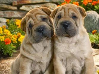 Resultado de imagen para perros lindos
