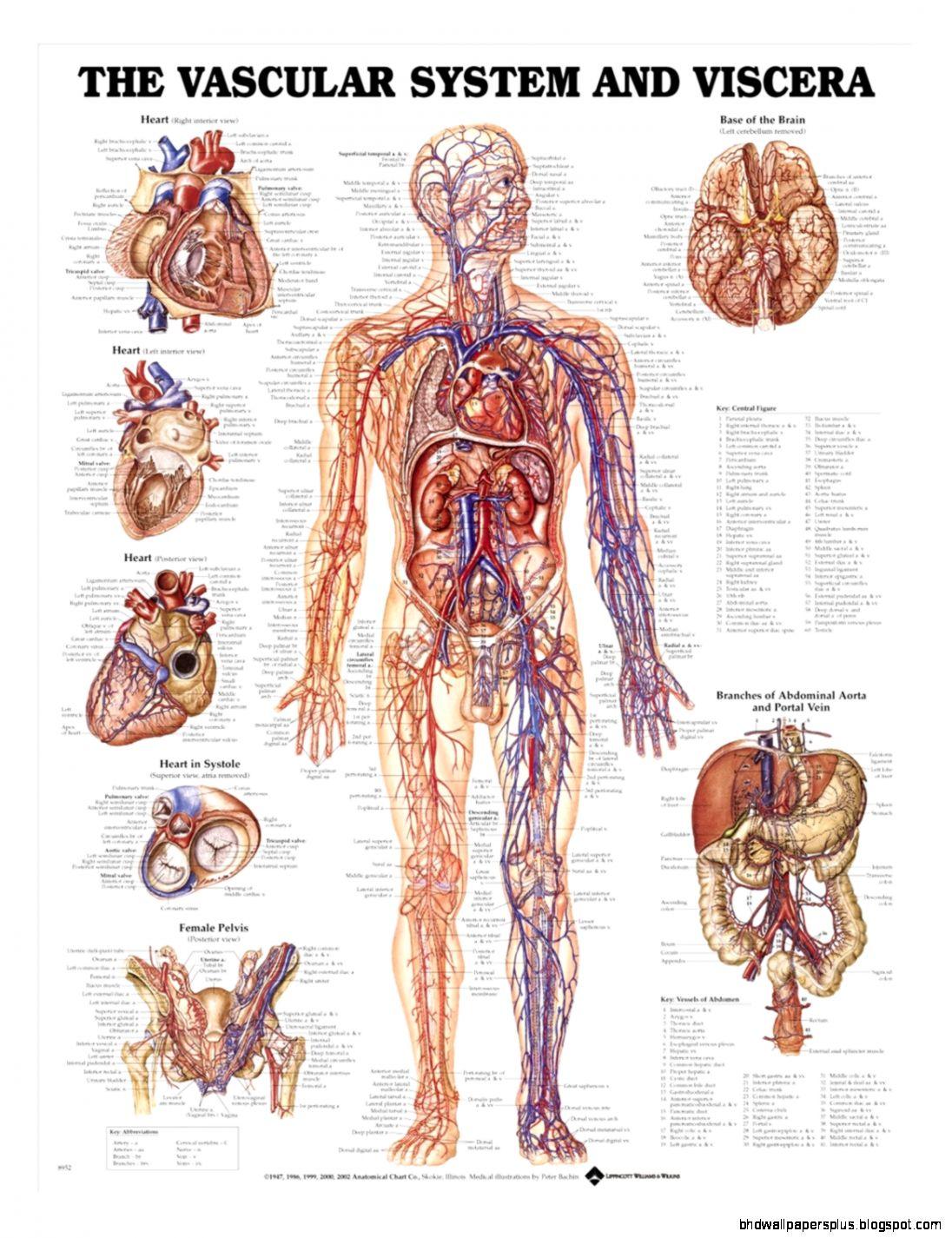 Anatomical Chart Company Charts Page 1   AnatomyStuff
