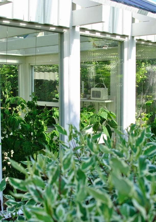 kornell ivory halo hannashantverk växthus
