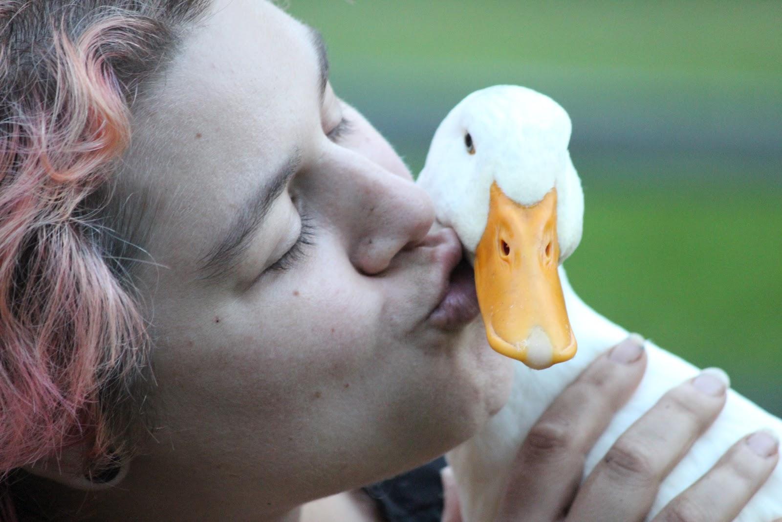 how to take care of baby mallard ducks