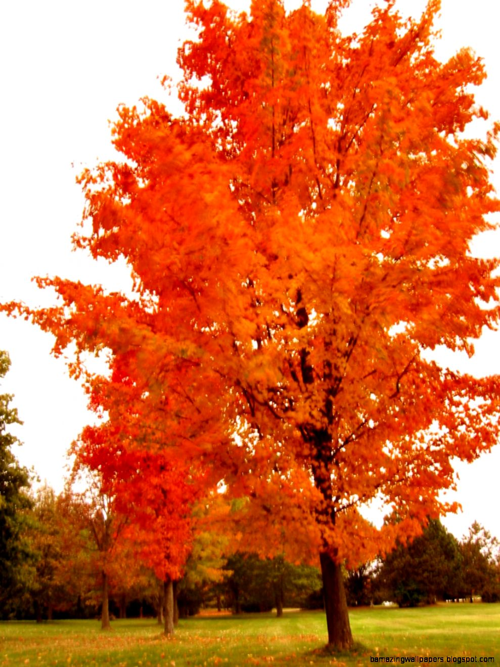 Soul Amp Psychedelic Fall Leaf and Tree Photos   Autumn leaves in