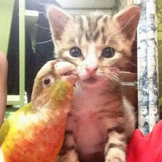 Funny Animals catched in Funny Moments